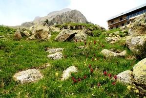 Dactylorhiza sambucina – Spanien, Pyrenäen, Nationalpark Posets-Maladeta, Valle de Grist