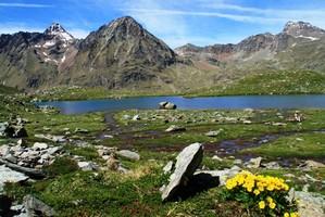 Geum reptans - Italien, Aostatal, Gran Paradiso-Nationalpark
